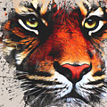 Tiger Eyes by Tim Wemple
