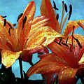 Tiger Lilies After The Rain - Painted by Ericamaxine Price