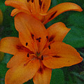 Tiger Lily  by Carol  Eliassen