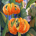 Tiger Lily Parachutes by Nancy Watson