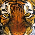 Tiger Mask  Original Oil Painting by Natalja Picugina