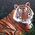 Tiger by Melissa Joyfully
