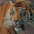 Tiger On Hunting by Yury Malkov