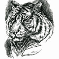 Tiger Portrait In Ink by MM Anderson