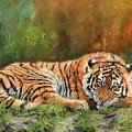 Tiger Repose by David Stribbling