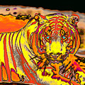Tiger Shining Bright by Carl Purcell