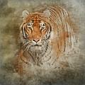 Tiger Splash by Teresa Wilson