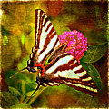 Zebra Swallowtail Butterfly - Digital Paint 3 by Debbie Portwood