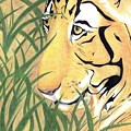 Tiger Traveler - Www.jennifer-d-art.com by Jennifer Skalecke