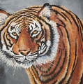 Tiger Watching by Laura Bolle