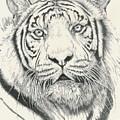 Tigerlily by Barbara Keith