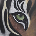 Tiger's Eye by Lens and Pencil Studios