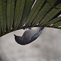 Tightrope Walker Bird by Fbmovercrafts