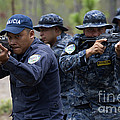 Tigres Commandos Conduct Bounding by Stocktrek Images