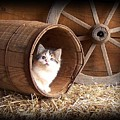 Tiki In The Old Barrel by Sue Martin