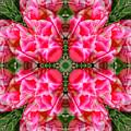 Tiki Tulip Mandala by Susan Bloom