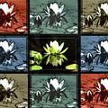 Tiled Water Lillies by Lance Sheridan-Peel