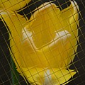 Tiled Yellow Tulip by Jennifer Wick