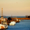 Tilghman Island Maryland by Bill Cannon