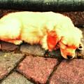 Tilly Resting by John Feiser