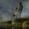 Timber Wolf by Daniel Eskridge