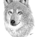 Timber Wolf by Rosanna Maria