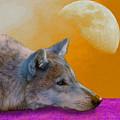 Timber Wolf Under The Moon by Tina B Hamilton