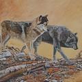 Timber Wolves by Santo De Vita