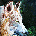 Timberwolf by Stan Hamilton