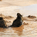 Time For A Mud Bath by Travis Rogers