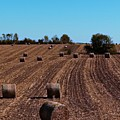 Time To Bale In Color by Teresa Hayes