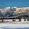 Timpanogos From The North Fields by TL Mair