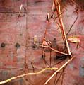 Tin Door - Red Pond by Wayne Sherriff
