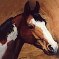 Tingeys Fancy   Paint Horse by JoAnne Corpany