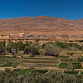 Tinghir Oasis, Province De Tinghir by Panoramic Images