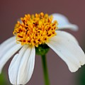 Tiny Ants In Tiny Flower by Mesa Teresita