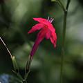 Tiny Beauty 1 by Susan Molnar
