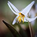 Tiny Beauty by Joni Eskridge
