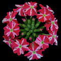 Tiny Bunch Of Red And Pink Flowers by Greg Thiemeyer
