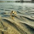 Tiny Crab In Water by Evan Dantas