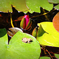 Tiny Frog by Tina Meador