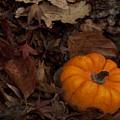 Tiny Pumpkin by Steven Natanson