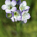 Tiny Purple And Blue by Erin Donalson