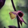 Tiny Purple Flower by Sarah Kish