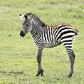 Tiny Stripes by Mike Fitzgerald