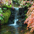 Tiny Waterfall In Japanese  Garden.the Butchart Gardens,victoria.canada. by Andrew Kim
