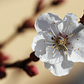 Tiny White Flower by Susan Campbell