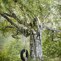 Tire Swing Hanging Off A White Birch by Betty  Pauwels