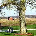 Tree Tire Swing  by Gravityx Designs