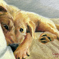 Tired Puppy by Dominic White
